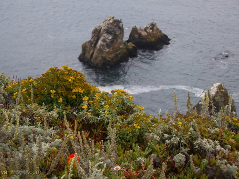 Bodega Cliffs